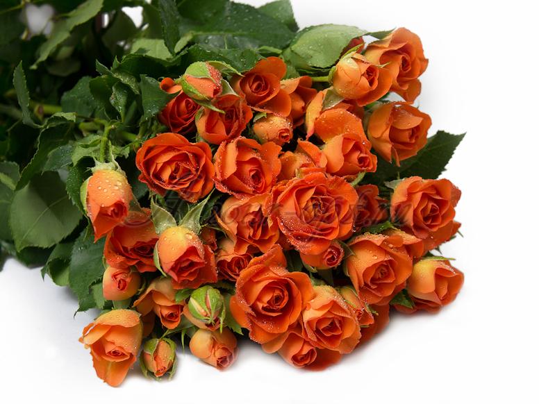 Для доставка цветов по москве дешево интернет оптом