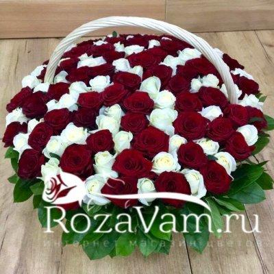 Корзина из 101 красно-белой розы