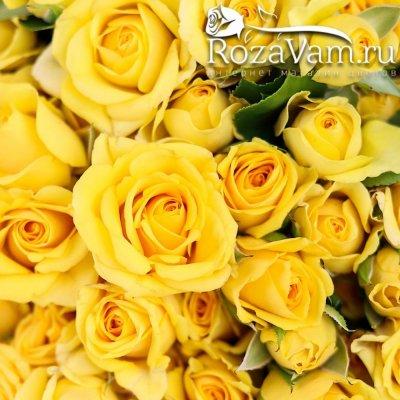 Букет из  101 желтой кустовой розы