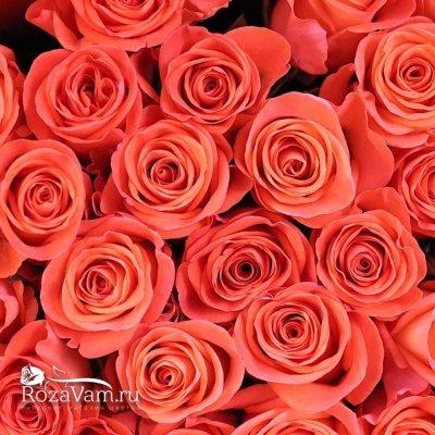 Букет из 51 оранжевой розы 60 см