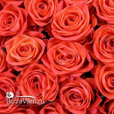 Букет из 101 оранжевой розы 50см)