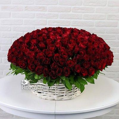 Корзина из 201 красной розы