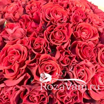 Коробка из 101 алой розы
