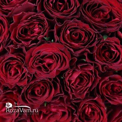 Букет из 151 розы 70 см