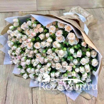 Букет кремовых кустовых роз 51шт