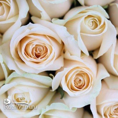 Букет из 51 кремовой розы 50 см
