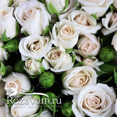 Букет из 25 кремовых кустовых роз