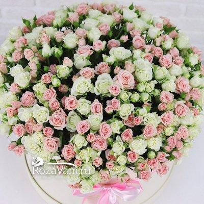 101 кустовая роза в коробке