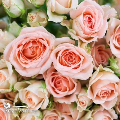101 кустовая розовая роза 50 см