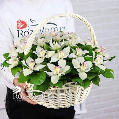 Корзина из 25 белых орхидей