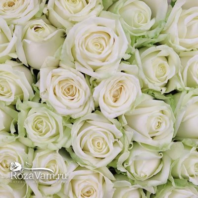 Букет из 101 белой розы (70 см)