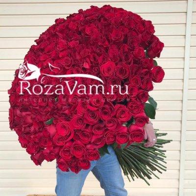 букет из 301  метровой  розы