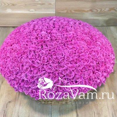 Корзина из 501 розовой розы