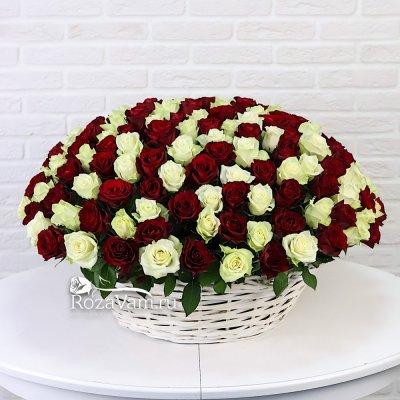 Корзина из 201 красно-белой розы