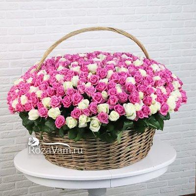 Корзина из 301 бело-розовой розы