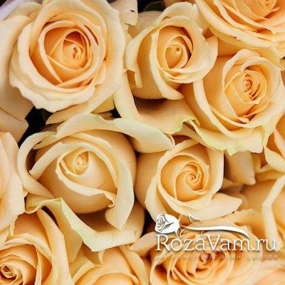 Букет из 19 кремовых роз (50 см)