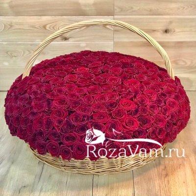 Корзина из 301 красной розы