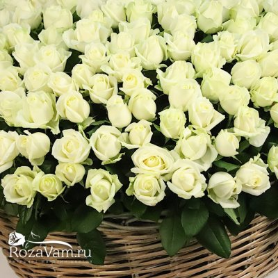 Корзина из 301 белой розы