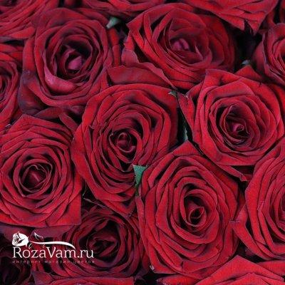 Букет из 101 красной розы (50 см)