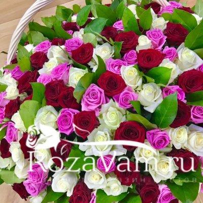 Корзина из 301 розы