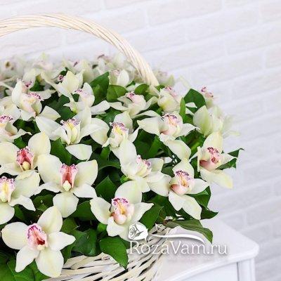 Корзина из 51 белых орхидей