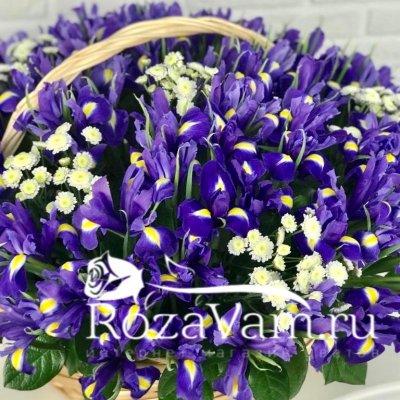 Корзина из 101 ириса с хризантемой