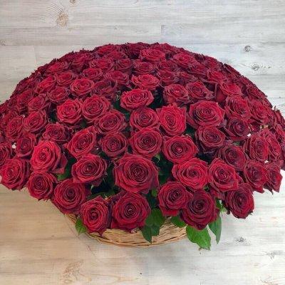 Корзина из 151 розы