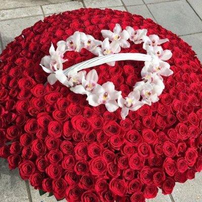 Корзина из 501 красной розы с орхидеей