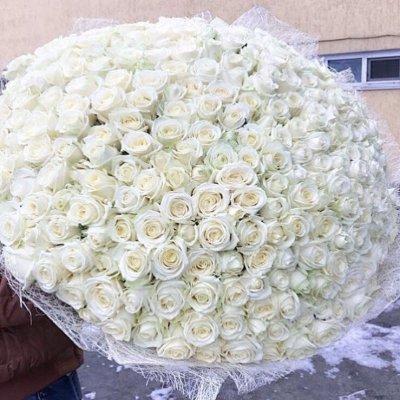 Букет из 301 белой розы ( 70см)