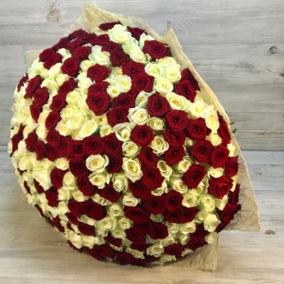 Букет из 301 красно-белой розы ( 70см)
