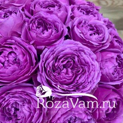 Шляпная коробка из пионовидных роз s